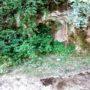 IMG_20200510_144415 (Small)